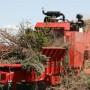 mp-2_grinding_municipal_yard_waste_compost
